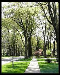 Myers Park Street
